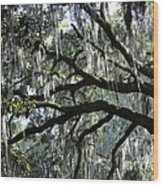 Silver Savannah Tree Wood Print