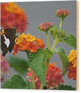 Silver-spotted Skipper Butterfly On Lantana Blossoms Wood Print