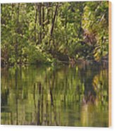 Silver Springs Nature Park Florida Wood Print by Christine Till