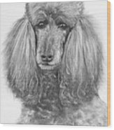Silver Standard Poodle Drawing Wood Print