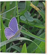 Silver Studded Blue Butterfly Wood Print