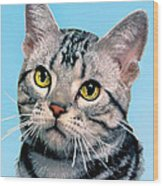 Silver Tabby Kitten Original Painting For Sale Wood Print