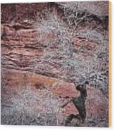 Silver Tree And Red Rocks Wood Print