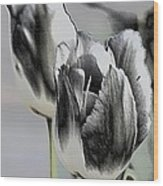 Silver Tulips Wood Print