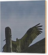 Silver Valley  Ospery Wood Print