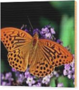 Silver Washed Fritillary Butterfly Wood Print