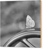 Silver White Butterfly Wood Print