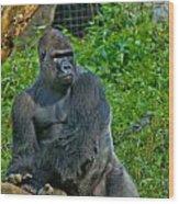 Silverback Gorilla  Wood Print