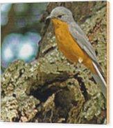 Silverbird Wood Print