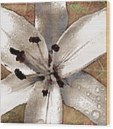 Silvery Asiatic Lily Wood Print
