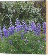 Silvery Lupine Black Canyon Colorado Wood Print