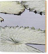 Silvery Sage Green Lily Pads Wood Print
