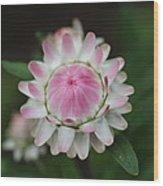 Simple White Straw Flower Wood Print