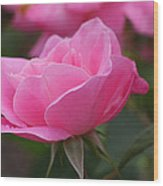 Simplicity Floribunda Rose Wood Print