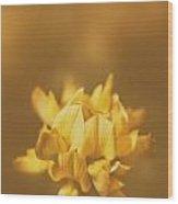 Simplistic Yellow Clover Flower  Wood Print