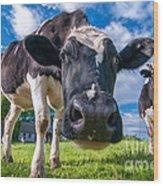 Simply Cows Wood Print