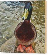 Simply Ducky Wood Print