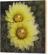 Simply Golden Cactus Flowers  Wood Print