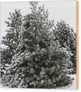 Simply Winter Wood Print
