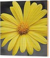 Simply Yellow Wood Print