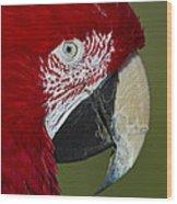 Sinbad... Wood Print