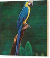 Singapore Macaw At Jurong Bird Park  Wood Print
