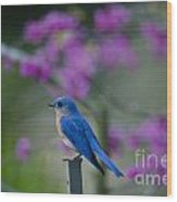 Singing Blue Bird Wood Print