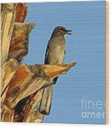 Singing Mockingbird Wood Print