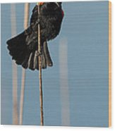 Blackbird Melody Wood Print