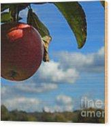 Single Apple Wood Print