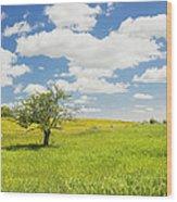 Single Apple Tree In Maine Blueberry Field Wood Print