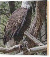 Single Bald Eagle Wood Print