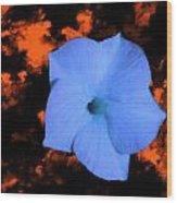 Single Blue Cactus Flower Wood Print
