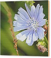 Single Blue Flower Wood Print by Stephanie Grooms
