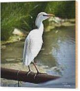 Single Cattle Egret Wood Print