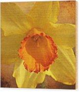 Single Daffodil Wood Print