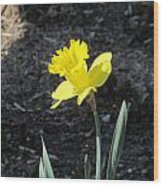 Single Daffodil Wood Print