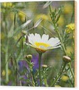 Single Daisy In A Field Wood Print