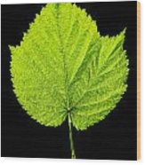 Single Leaf From Raspberry Bush Wood Print