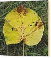 Single Leaf Wood Print