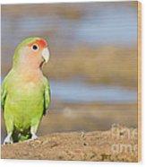 Single Love Bird Seeks Same Wood Print