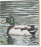 Single Mallard Duck In Water Wood Print