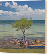 Single Mangrove Tree In The Gulf Wood Print