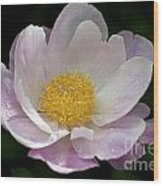 Single Peonie  8444 Wood Print