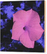Single Pink Cactus Flower Wood Print