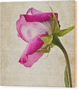 Single Pink Rose Wood Print