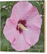 Single Pink Wood Print