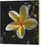 Single Plumeria Wood Print