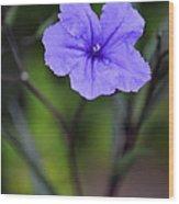 Single Purple Mexican Petunia Ruellia Brittoniana Wood Print
