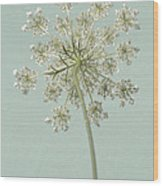 Single Queen Anne's Lace Wood Print